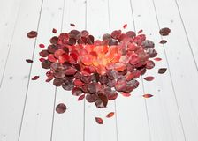 Heart with autumn leaves on the wooden background Royalty Free Stock Images