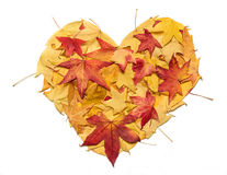 Heart of Autumn Stock Images