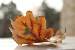 Heart autumn Royalty Free Stock Photo