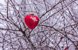 Heart on a background of a bush with thorns in the frost. Stock Photo