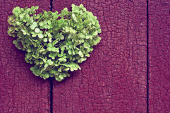 Heart  background of the fence. Green heart of flowers on a background of a wooden fence Stock Photography