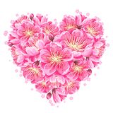 Heart background with sakura or cherry blossom. Floral japanese ornament of blooming flowers.  royalty free illustration