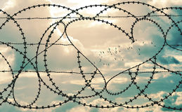 Heart in barbwire frames flock of birds in cloudscape background. Natural heart shape in a barbed wire fence on cloudscape background. Flock of birds flying Royalty Free Stock Image