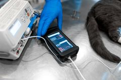Heart beat counter connected to cat on operation table. Pet surgery.  stock photography