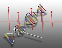 Heart beats and DNA royalty free illustration