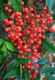 Heart Berries Stock Photography