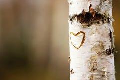 Heart birch tree. Heart on a white birch tree Royalty Free Stock Photo