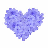Heart with blue flower Stock Photos
