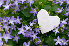Heart on blue flowers Stock Photography