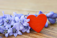 Heart and blue flowers Royalty Free Stock Photography