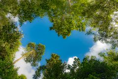Heart-shaped sky in the forest royalty free stock photography