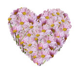 The heart of bouquet of pink daisies isolated on a white Royalty Free Stock Photos