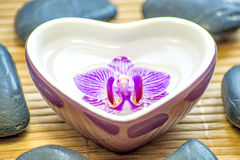 Heart bowl with orchid bloom Stock Images