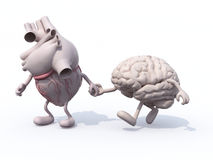 Heart and brain that walk hand in hand Stock Image