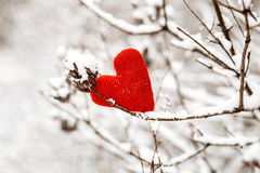Heart on branches Royalty Free Stock Photo