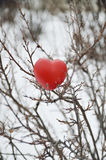 Heart in a bush Royalty Free Stock Images