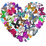 Heart of the butterflies Stock Photos