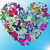 Heart of the butterflies Stock Images