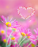 Heart of butterflies on a pink background with chrysanthemums Royalty Free Stock Image