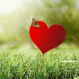 Heart with butterfly. Grass, sun and bokeh background stock images