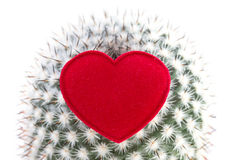 Heart on cactus Royalty Free Stock Photography
