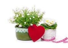 Heart, campanula, primrose, Valentine's Day Royalty Free Stock Image