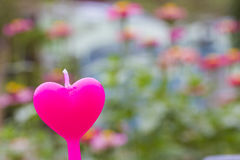 Heart candle in the flower garden Stock Photo