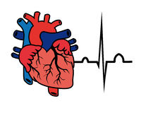Heart cardiogram Stock Images