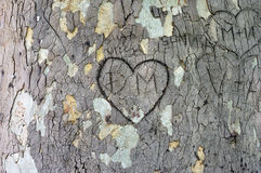 Heart carved in the bark Stock Photo
