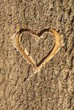 Heart carved in the bark of a tree. Stock Photos