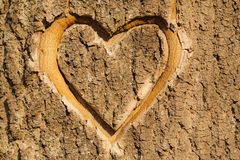 Heart carved in the bark. Heart carved in the bark of a tree as en symbol of love stock photos