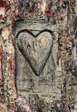 Heart carved in the bark of a tree. Symbol of love Royalty Free Stock Photography