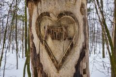 Heart Carved Tree Royalty Free Stock Photo
