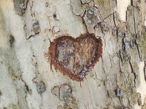 Heart. Carved in tree bark texture Stock Image