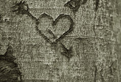 Heart carved in a tree. In forest Stock Image