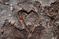 Heart carved in tree Royalty Free Stock Photo