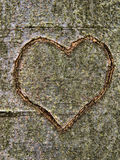 Heart carved in tree trunk Royalty Free Stock Photography