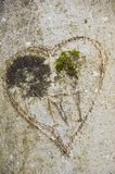 Heart carved on a tree trunk. With initials of loves Stock Photos