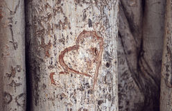 Heart carved on a tree trunk Stock Photography