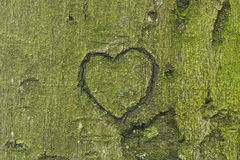 Heart carved in tree trunk Stock Images