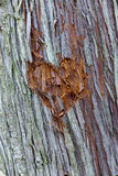 Heart carved into tree. Royalty Free Stock Photography