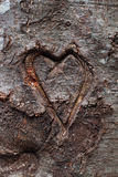 Heart carved in tree Stock Photos