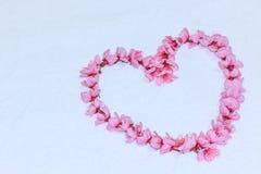 Heart from Cherry blossoms or sakura Stock Image