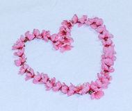 Heart from Cherry blossoms or sakura Royalty Free Stock Photography