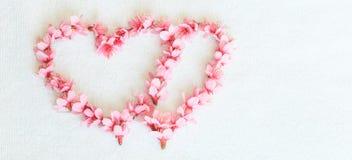 Heart from Cherry blossoms or sakura Royalty Free Stock Photo