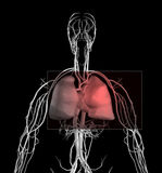 Heart and Chest Pain Royalty Free Stock Photo