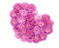 Heart from chrysanthemum flowers Royalty Free Stock Photo