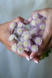 Heart from chrysanthemums Stock Photography