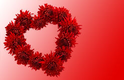 Heart of chrysanthemums. Royalty Free Stock Photography