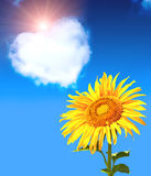 Heart from clouds and sunflower Royalty Free Stock Image